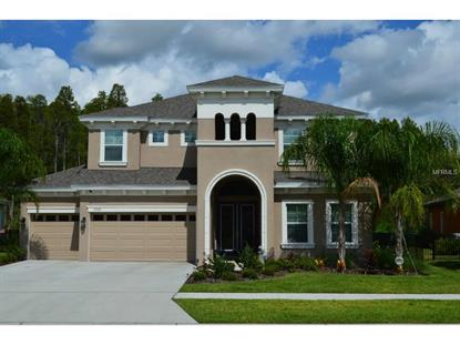 19329 AUTUMN CHASE  CT Land O Lakes, FL MLS# U7708960