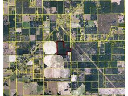 145th St 110 Acre Tree Farm  Live Oak, FL MLS# RX-10026916