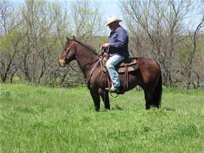 TBD County Rd 700  Alvarado, TX MLS# 13350405
