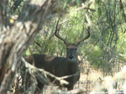 1085 Cr 324 , Sabinal, TX