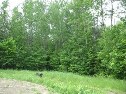 Lot #2 Woods Trail Road Burke Mountain, VT MLS# 4363821