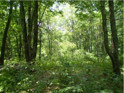 Lot 162 Blake Rd Danville, NH MLS# 4426213