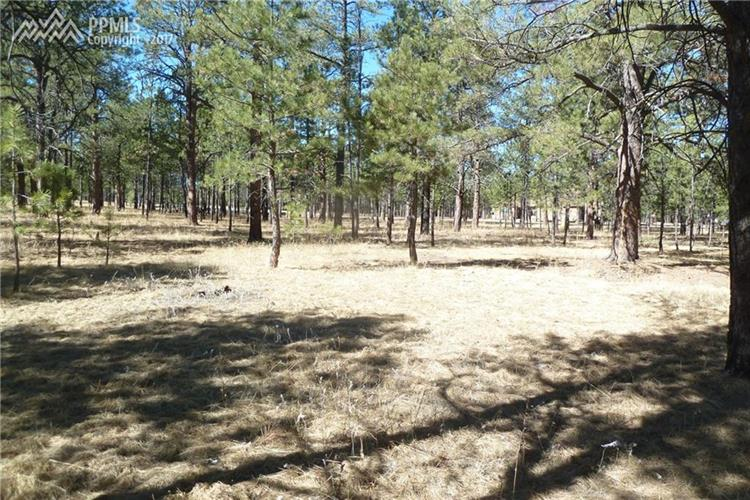 16164 Pole Pine Pt, Colorado Springs, CO 80908