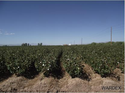 0000 Bulk Sale Farm Land  Mohave Valley, AZ MLS# 894621