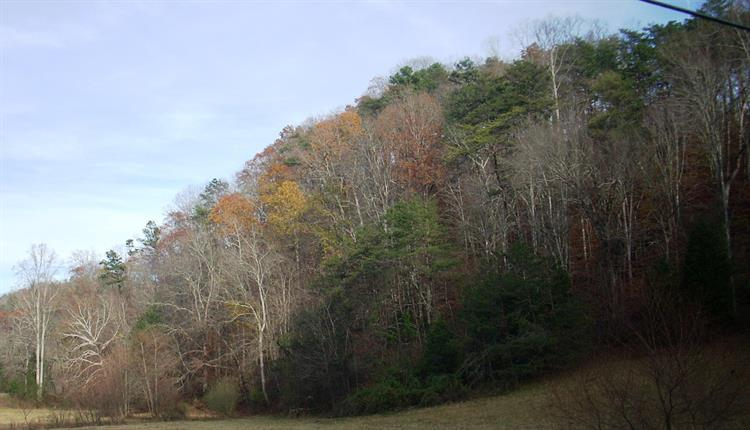 Pickens Gap Rd, Knoxville, TN 37920 - Image 1