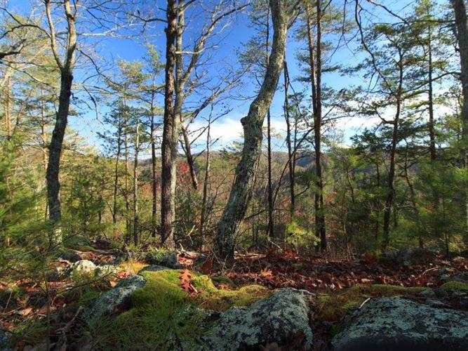 Off Steer Creek Rd., Tellico Plains, TN 37385 - Image 1