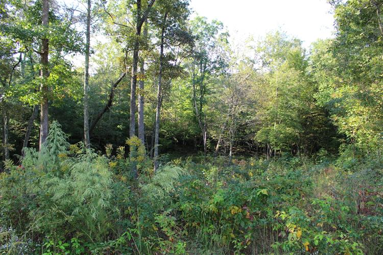 Mountain Preserve Pkwy, Crab Orchard, TN 37723