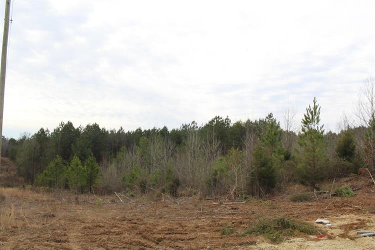 Lot 11 12 County Road 775, Riceville, TN 37370 - Image 1