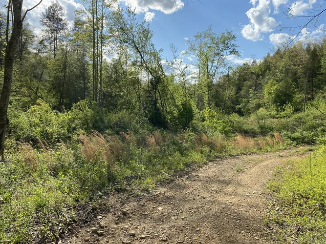 Tract 8 Mt. View Rd, Robbins, TN 37852 - Image 1