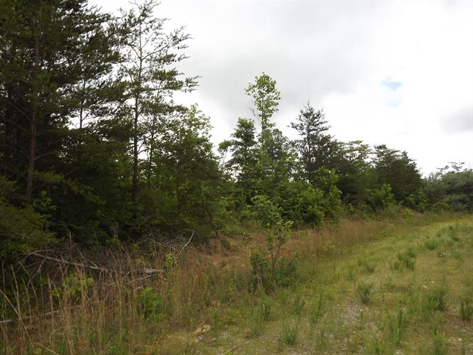 Arbutus Trail, Helenwood, TN 37755 - Image 1
