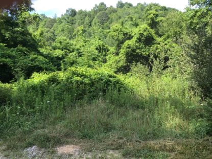 0 Cherry Fork  Helenwood, TN MLS# 1124561