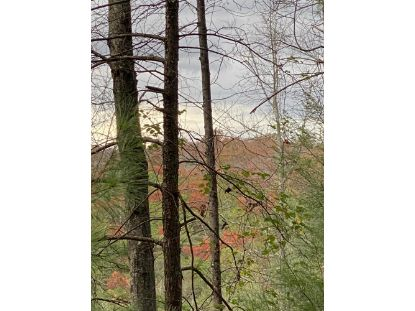Off Holder Cemetery Rd Tellico Plains, TN MLS# 1135545