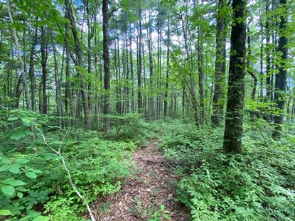 TBD Rock Creek Road Rosman, NC MLS# 3637999