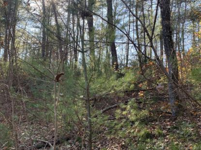 Lot 83 Mountain Home Trail Brevard, NC MLS# 3679916