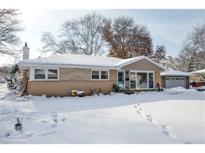 1036 N Gibbons Avenue Arlington Heights, IL MLS# 10148938