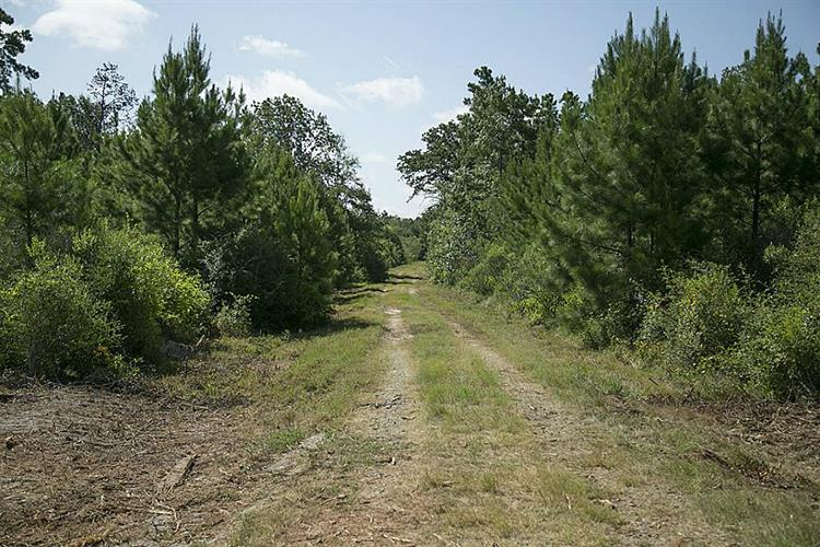 117 Ac State Highway 19, Lovelady, TX 75851