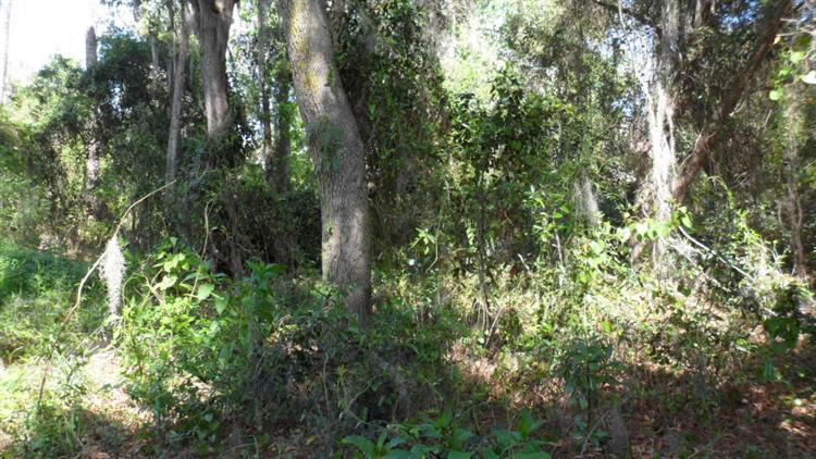 TBD NE 306 Court, Salt Springs, FL 32134 - Image 1
