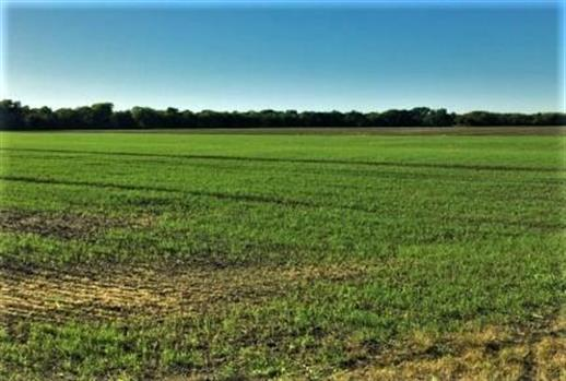 Lot 3 Holder Road, Waxahachie, TX 75165