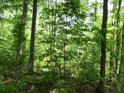 27 .1 AC West View Road  Spencer, TN MLS# 2193589