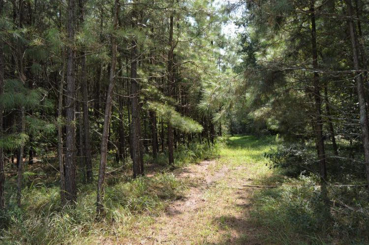 Tract 2 Herrings Chapel Road, Burgaw, NC 28425 - Image 2