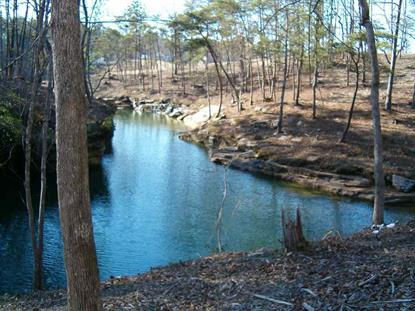 00 BEAR COVE LANE Arley, AL MLS# 1106229
