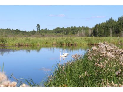TBD King Rd  Orr, MN MLS# 5639093