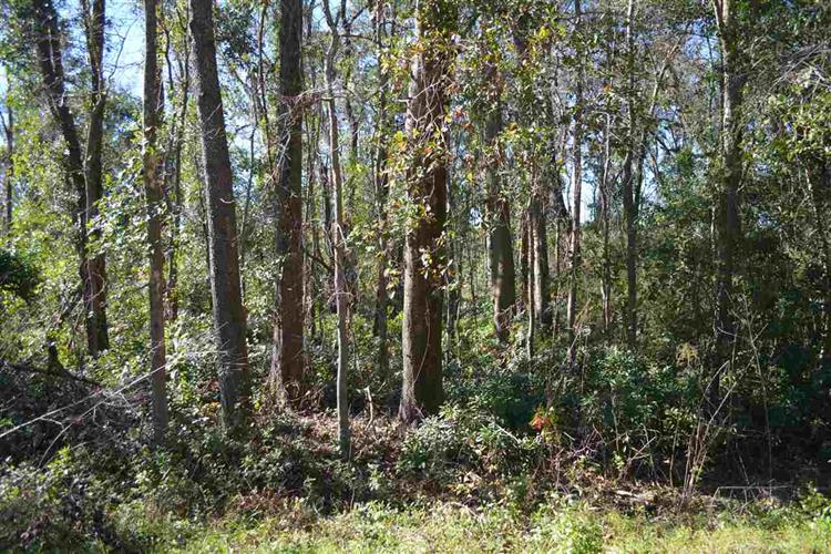 3.6acres Northshore, Tallahassee, FL 32312 - Image 2