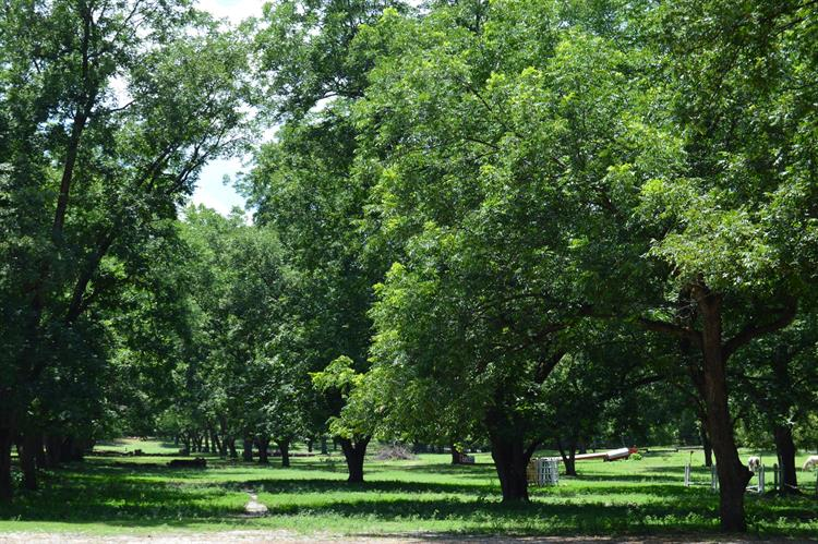 Lot 1 N May Street, Southern Pines, NC 28387 - Image 1