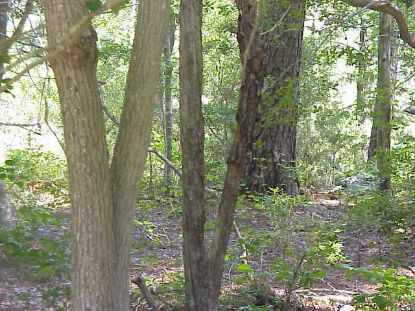 Lot C HOLLY SHORES LN  Hacksneck, VA MLS# 50168