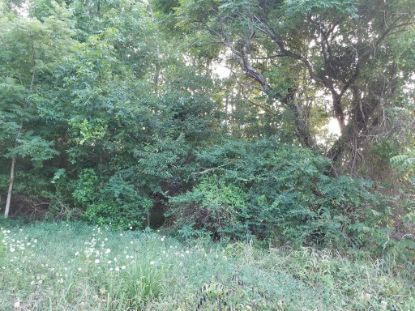 Lot 8,9A SAVAGETOWN RD  Belle Haven, VA MLS# 52079