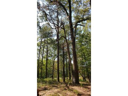 Lot 8 WELLINGTON NECK RD  Franktown, VA MLS# 52690