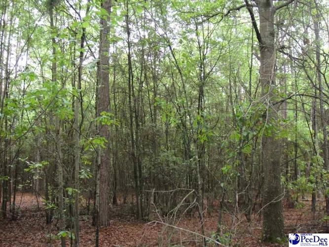 Bumm Dr., Timmonsville, SC 29161 - Image 1