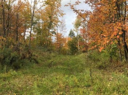 ON LONG LAKE RD  Glidden, WI MLS# 187561