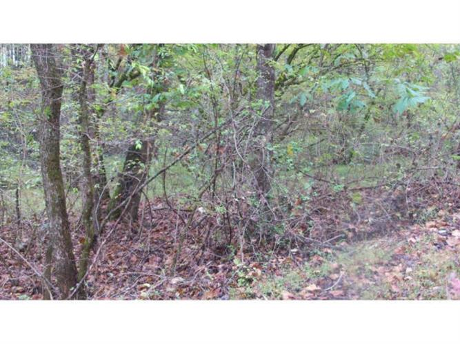 01 TIMBER TREE BRANCH Road, Hiltons, VA 24258 - Image 2