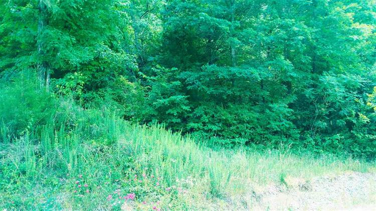 Lot 25 Redman Street, Decatur, TN 37322