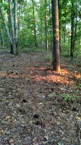 5 Ac. White Oak Valley Circle, Collegedale, TN 37315