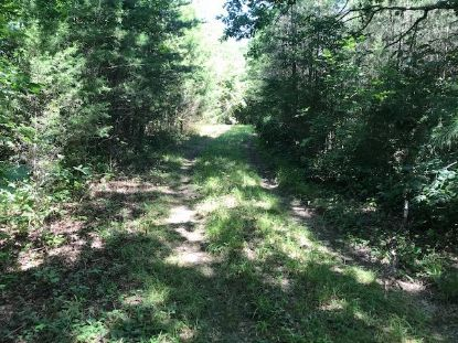Co Rd 875 County Road 875  Etowah, TN MLS# 20206709