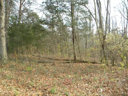 21.01 Ac County Road 295  Niota, TN MLS# 20209979