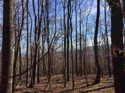 1385 BRYANT MOUNTAIN RD  Roseland, VA MLS# 605246