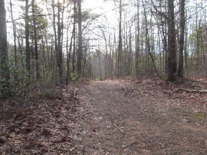 TBD Tall Tree Lane 52.43 AC  Austinville, VA MLS# 72818
