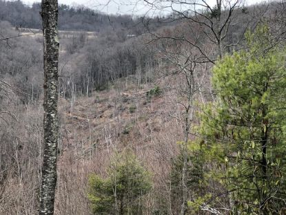 TBD Paul's Creek Rd  Cana, VA MLS# 73163