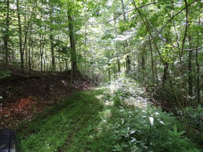 TBD Tumbling Creek Rd  Saltville, VA MLS# 74496