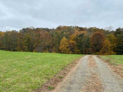 TBD Parkview Drive  Cana, VA MLS# 76001