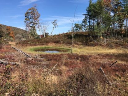 17.52 Ac Lots Gap Road  Max Meadows, VA MLS# 76037