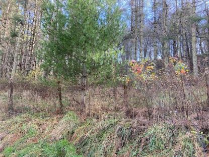 69.92 ac Dark Hollow Rd  Sugar Grove, VA MLS# 76321