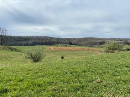 25 acres Peppers Ferry Rd  Max Meadows, VA MLS# 77868