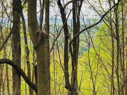 00 Bear Trail