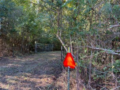 +/-150 Acres HWY 450 Highway Franklinton, LA MLS# 2275111